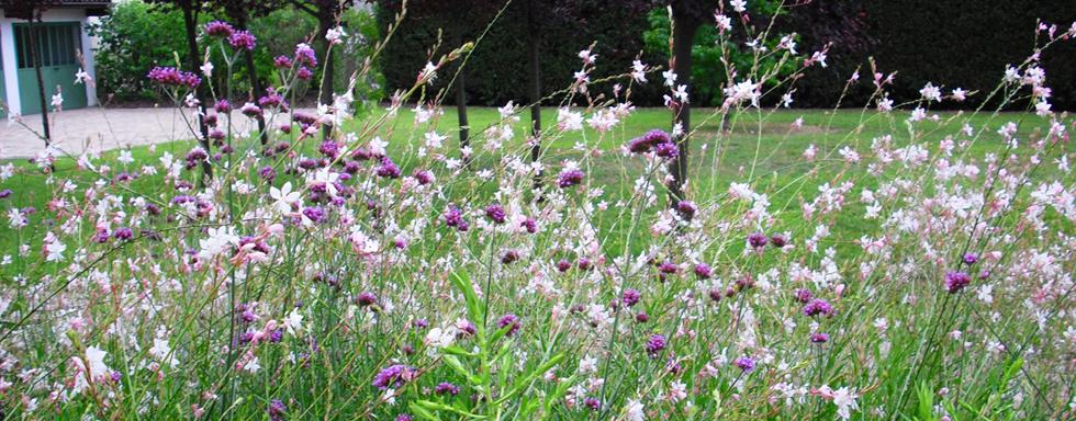Giardini – cura per il tuo verde
